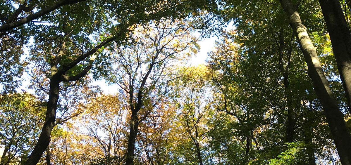 Herfstfoto van een bomendek